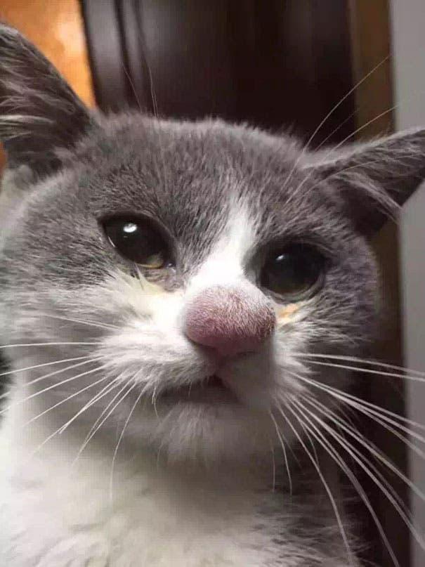 gatos-vs-abejas-10