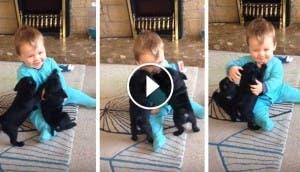 niño-jugando-con-dos-perritos