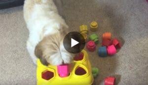 perro--genio-cooper