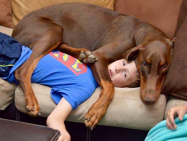 perros espacio personal 10