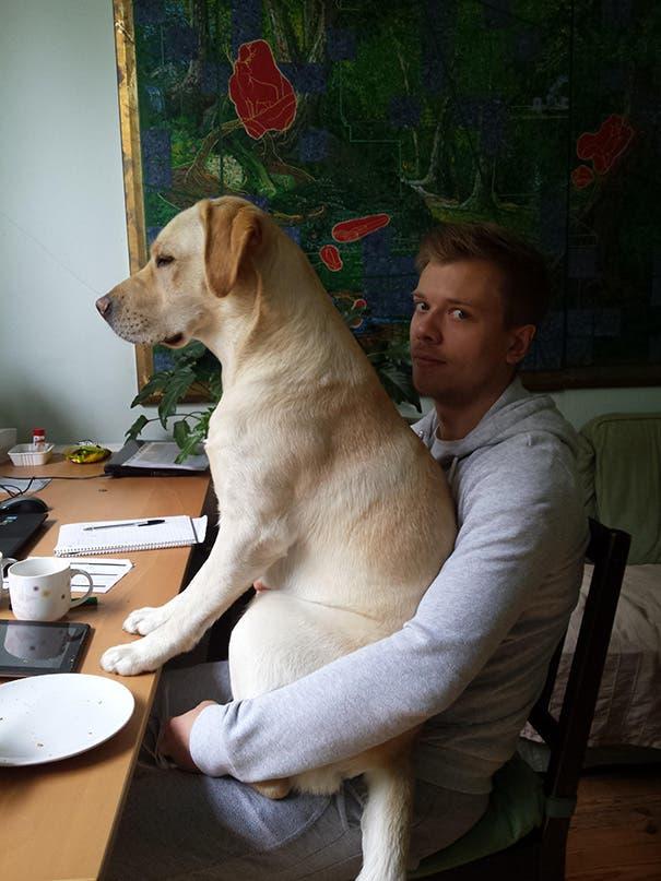 perros espacio personal 8