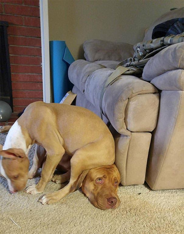 perros espacio personal 9