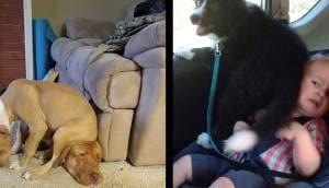 perros espacio personal id
