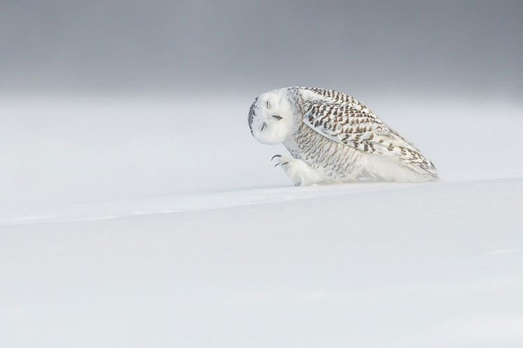 top-fotos-national-geographic4