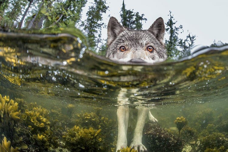 top-fotos-national-geographic6