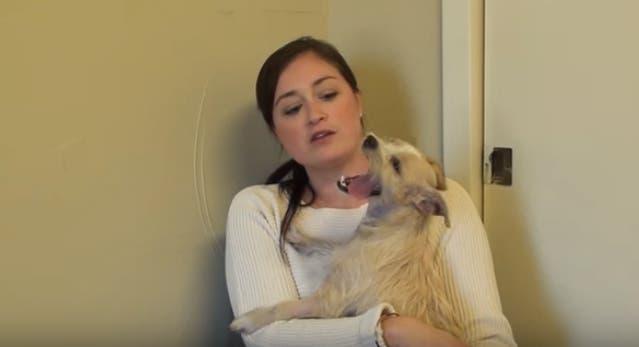El asombroso rescate de Violeta, una perrita que sufrió un caso desgarrador de maltrato