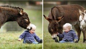 13-razones-para-tener-un-burro-bebe15