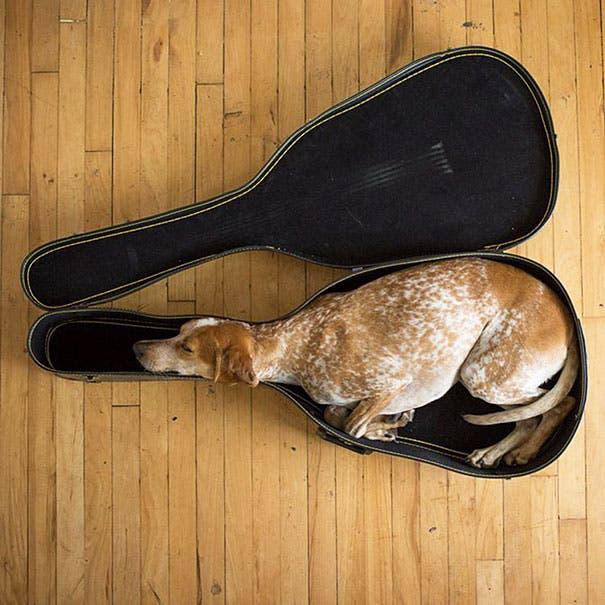 animales dormidos lol 4