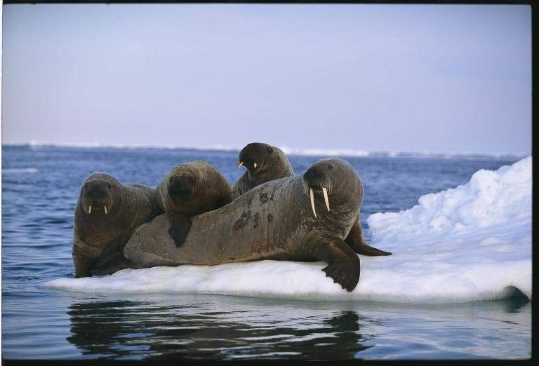 animales jugando en nieve 10