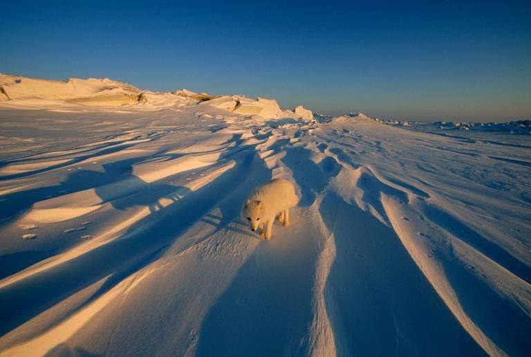 animales jugando en nieve 14
