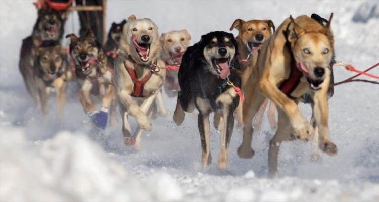 animales jugando en nieve 5