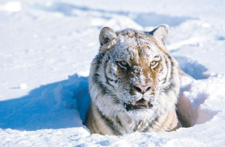 animales jugando en nieve 6