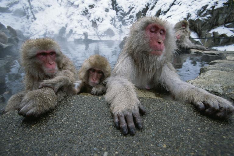 animales jugando en nieve 7
