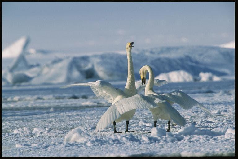 animales jugando en nieve 8