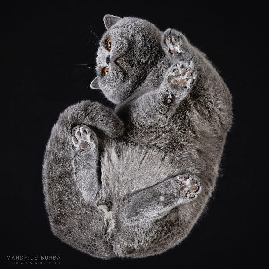 bajo gatos 1