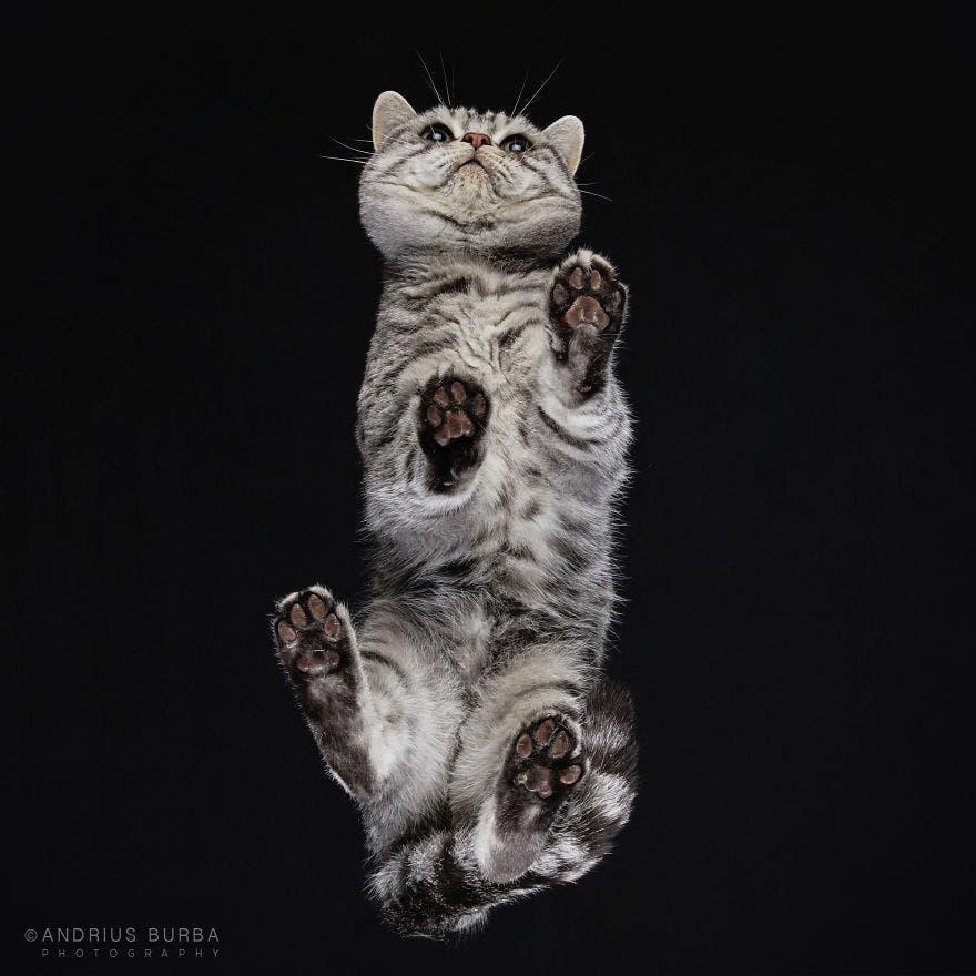 bajo gatos 3