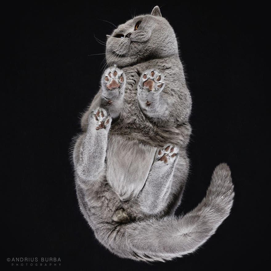 bajo gatos 4