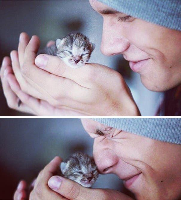 chicos lindos con gatitos 1