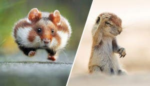 concurso-animales