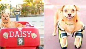 daisy-dog