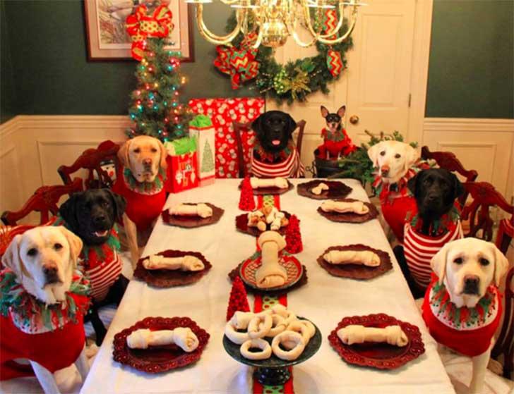 Una pareja preparó una cena de Navidad muy especial para su familia canina. Pero eso no es todo…