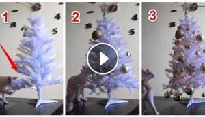 gato-decora-arbol-de-navidad6