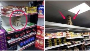 gato-dueno-supermercado3 - copia