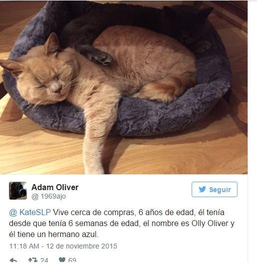 gato-dueno-supermercado9