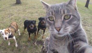 gato selfie 1 id