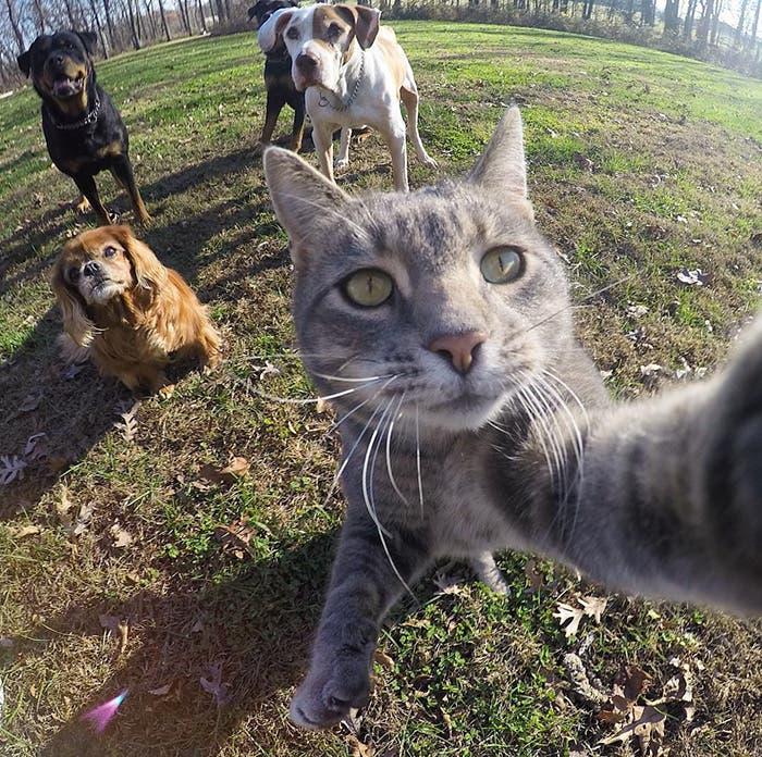 gato selfie 1