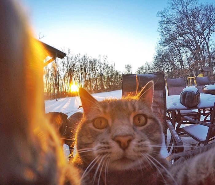gato selfie 4