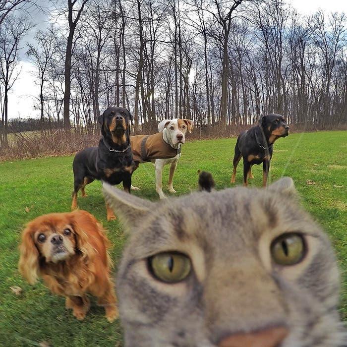 gato selfie 5