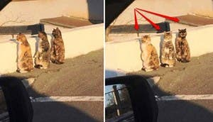 gatos-sorprendidos-sospechosa-actitud1 - copia