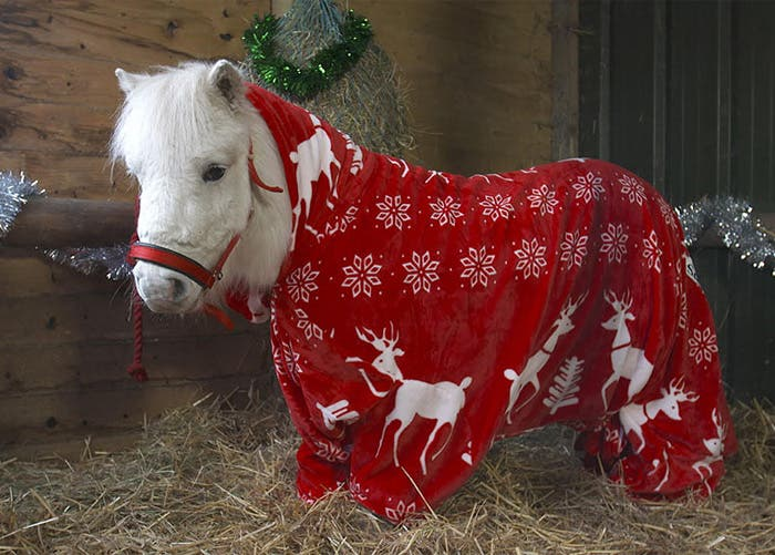 hacen-abrigo-para-su-pony2