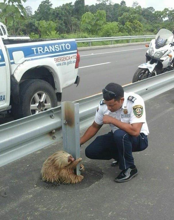 pereza-carretera-policia4
