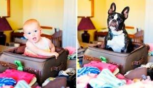 perro-hija