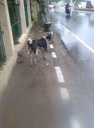 perro-rescata-sus-cachorros-en-inundacion-india2