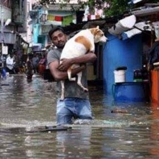 En medio de una devastadora inundación, esta luchadora perrita salvó a sus cachorros
