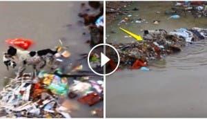 perro-rescata-sus-cachorros-en-inundacion-india8
