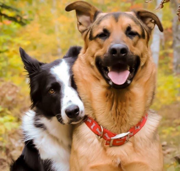 perros-mejores-amigos1