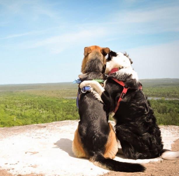 perros-mejores-amigos2