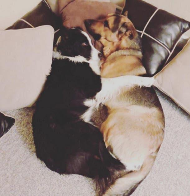 perros-mejores-amigos3