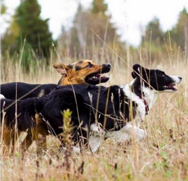 perros-mejores-amigos4
