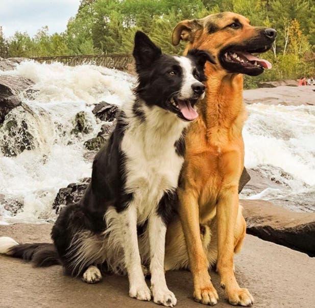 perros-mejores-amigos5