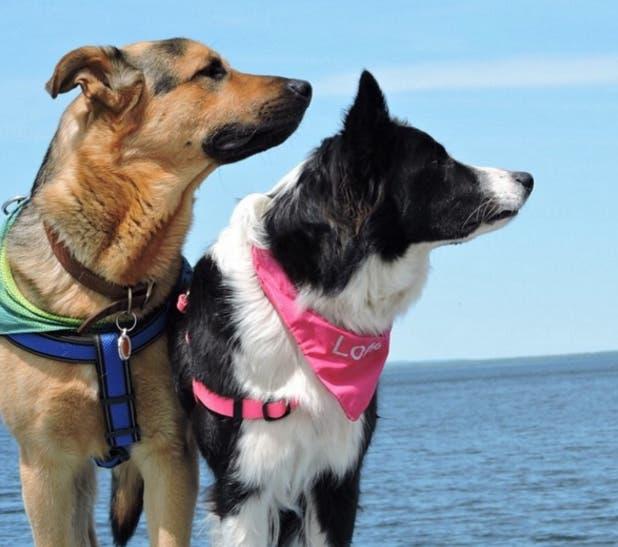 perros-mejores-amigos6