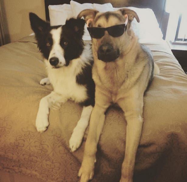 perros-mejores-amigos7