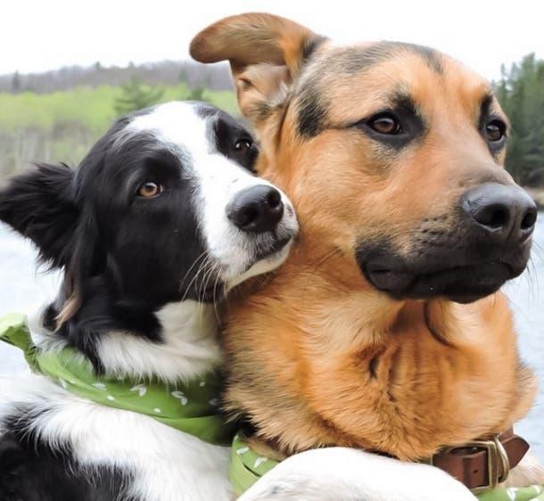perros-mejores-amigos8