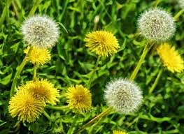 plantas-medicinales-propiedades12