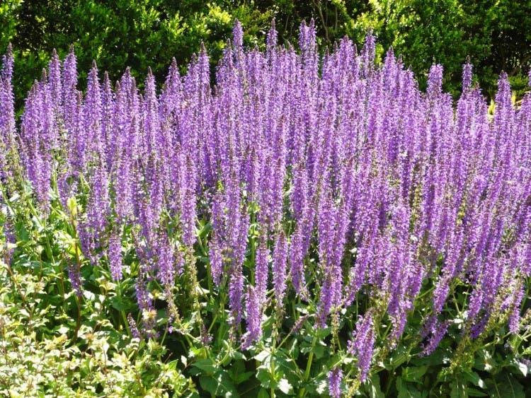 plantas-medicinales-propiedades6