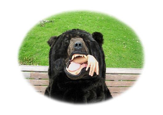 saco de oso 6